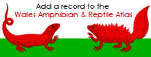 Submit a record to the Wales Online Amphibian & Reptile Atlas
