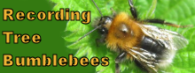 Tree Bumblebee Button